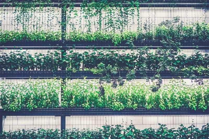 piante-cover