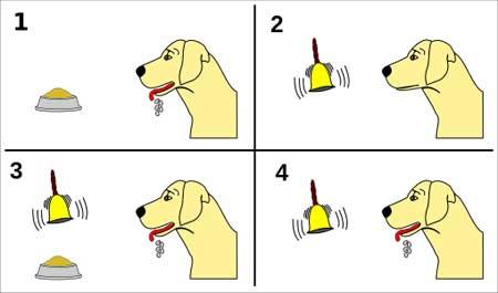 Schema del cane di Pavlov